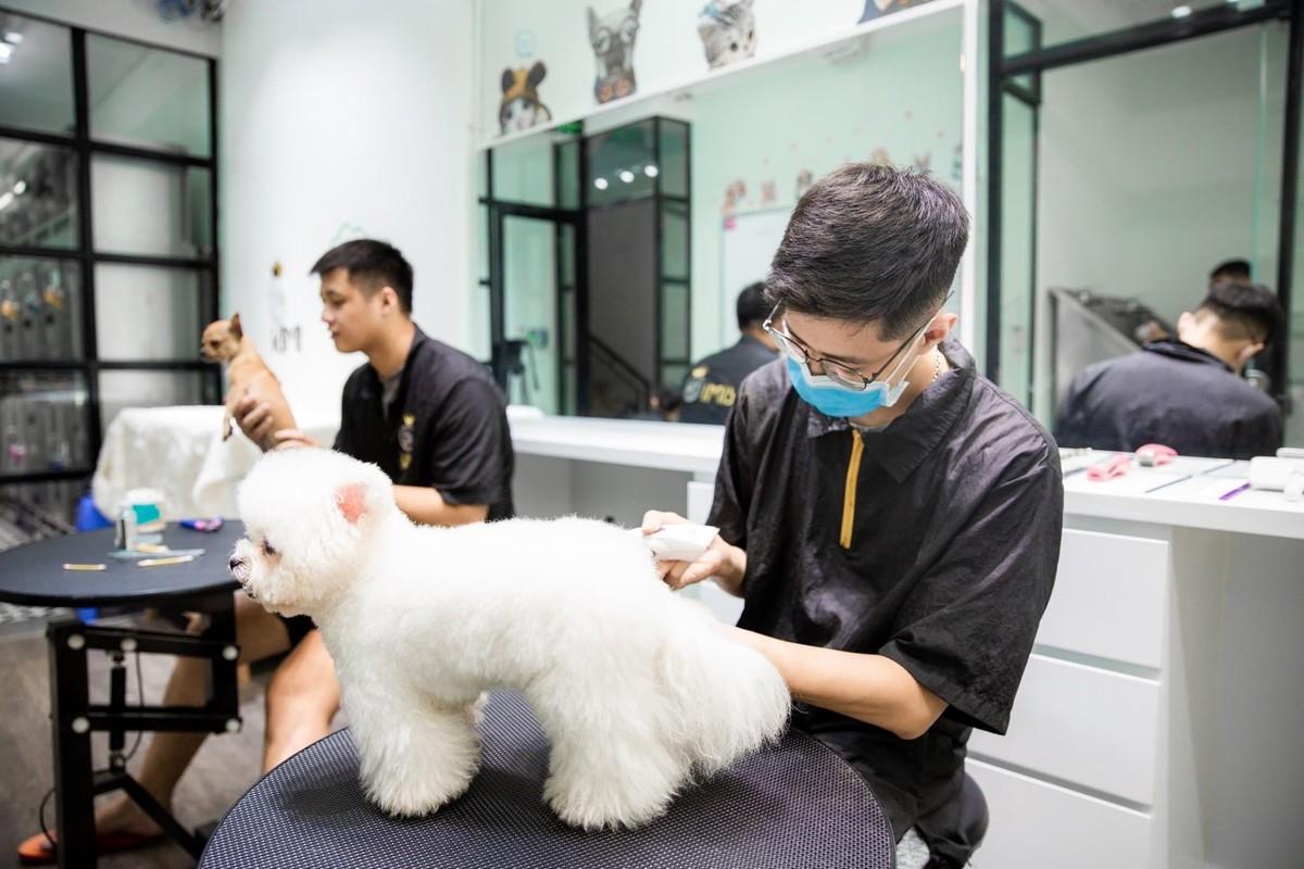 Dịch vụ thú cưng